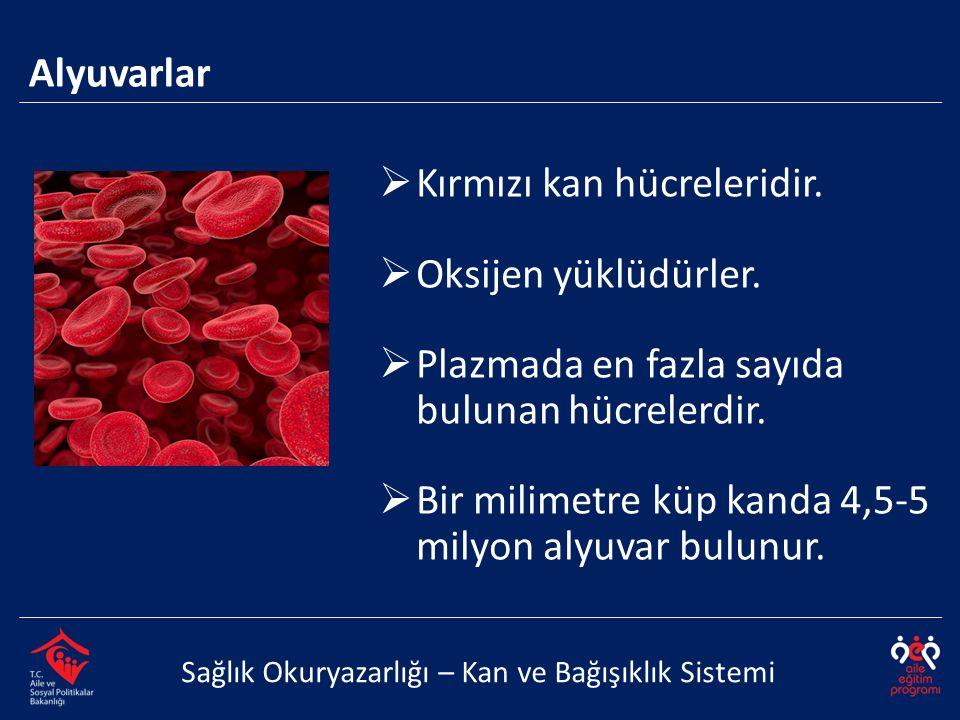 Alyuvarlar Sağlık Okuryazarlığı – Kan ve Bağışıklık Sistemi  Kırmızı kan hücreleridir.  Oksijen yüklüdürler.  Plazmada en fazla sayıda bulunan hücr
