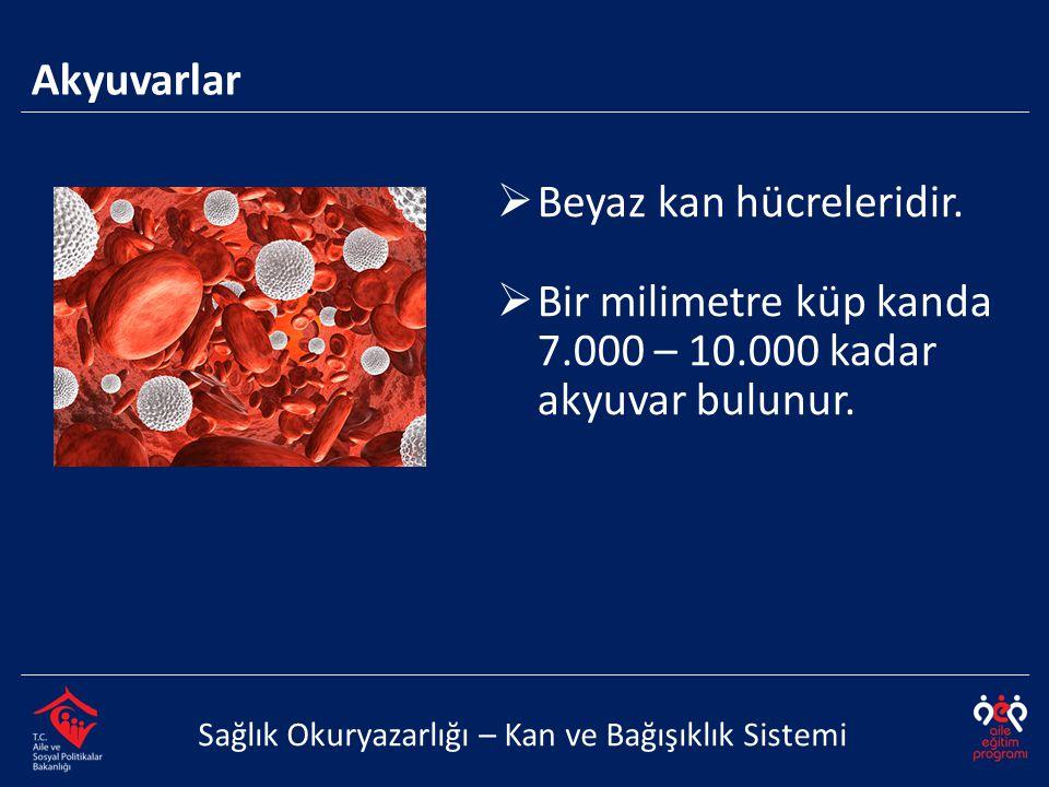Akyuvarlar Sağlık Okuryazarlığı – Kan ve Bağışıklık Sistemi  Beyaz kan hücreleridir.  Bir milimetre küp kanda 7.000 – 10.000 kadar akyuvar bulunur.
