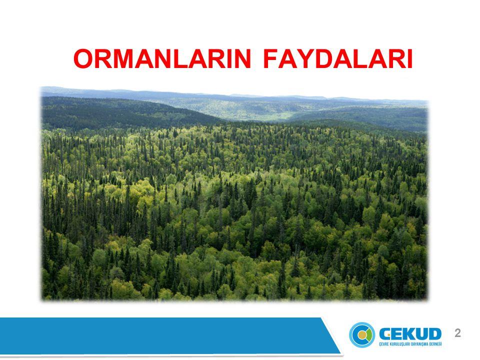 2 ORMANLARIN FAYDALARI