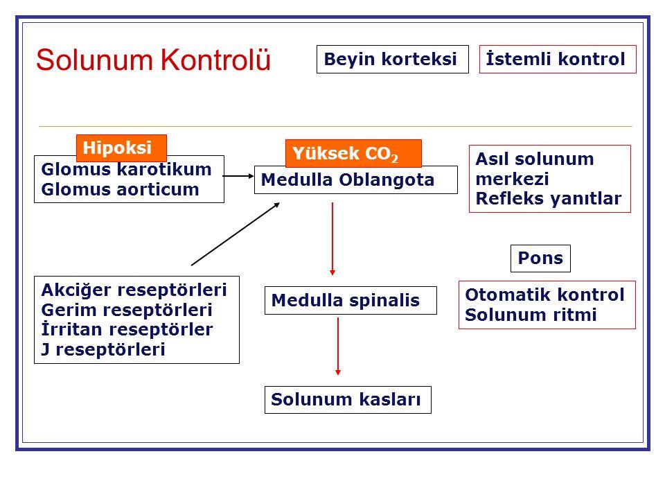 Beyin korteksi Pons Medulla Oblangota Medulla spinalis Solunum kasları Akciğer reseptörleri Gerim reseptörleri İrritan reseptörler J reseptörleri Glom