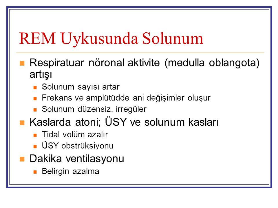 REM Uykusunda Solunum Respiratuar nöronal aktivite (medulla oblangota) artışı Solunum sayısı artar Frekans ve amplütüdde ani değişimler oluşur Solunum