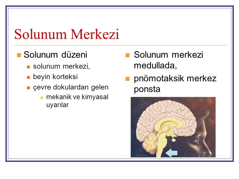 Solunum Merkezi Solunum düzeni solunum merkezi, beyin korteksi çevre dokulardan gelen mekanik ve kimyasal uyarılar Solunum merkezi medullada, pnömotak