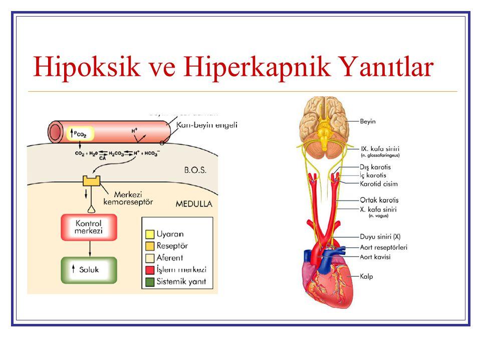 Hipoksik ve Hiperkapnik Yanıtlar