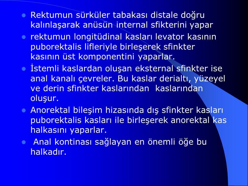 Rektumun sürküler tabakası distale doğru kalınlaşarak anüsün internal sfikterini yapar rektumun longitüdinal kasları levator kasının puborektalis lifl