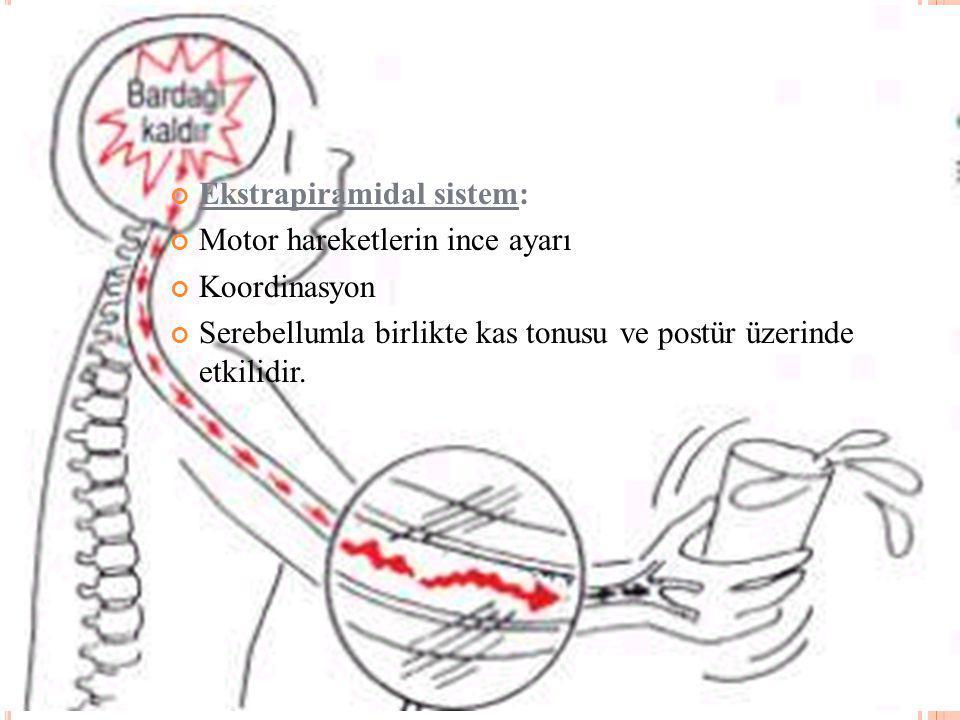 Ekstrapiramidal sistem: Motor hareketlerin ince ayarı Koordinasyon Serebellumla birlikte kas tonusu ve postür üzerinde etkilidir.