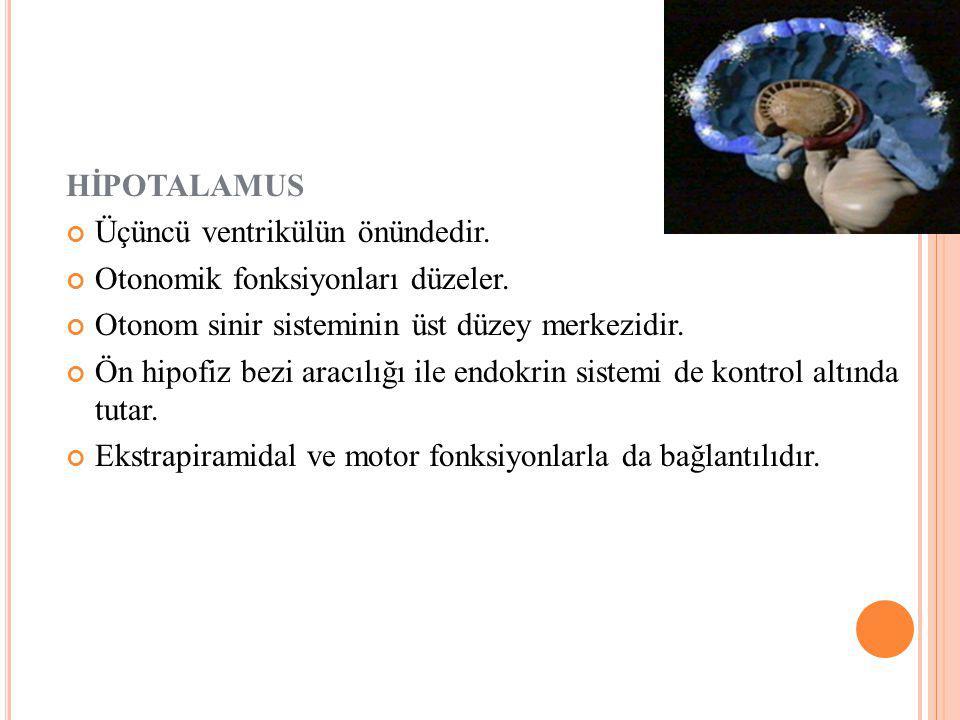 HİPOTALAMUS Üçüncü ventrikülün önündedir.Otonomik fonksiyonları düzeler.