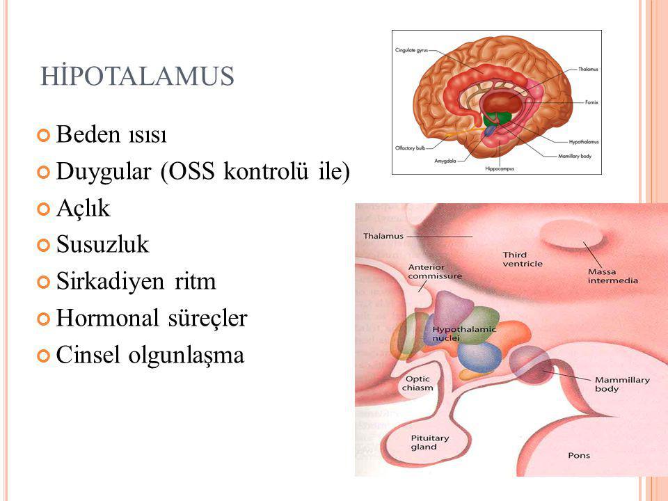 HİPOTALAMUS Beden ısısı Duygular (OSS kontrolü ile) Açlık Susuzluk Sirkadiyen ritm Hormonal süreçler Cinsel olgunlaşma