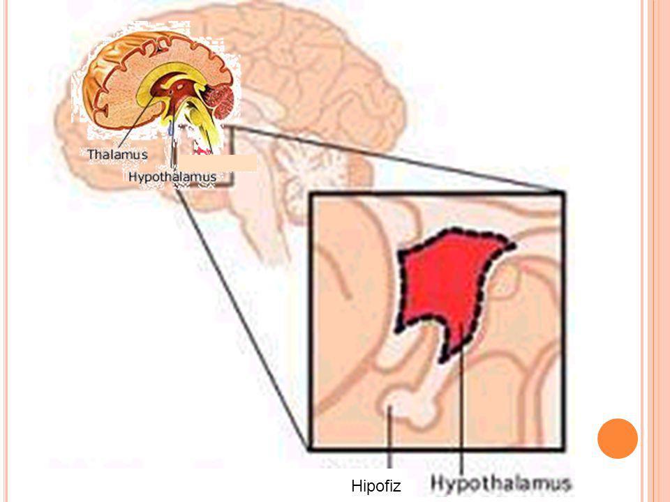 Hipofiz