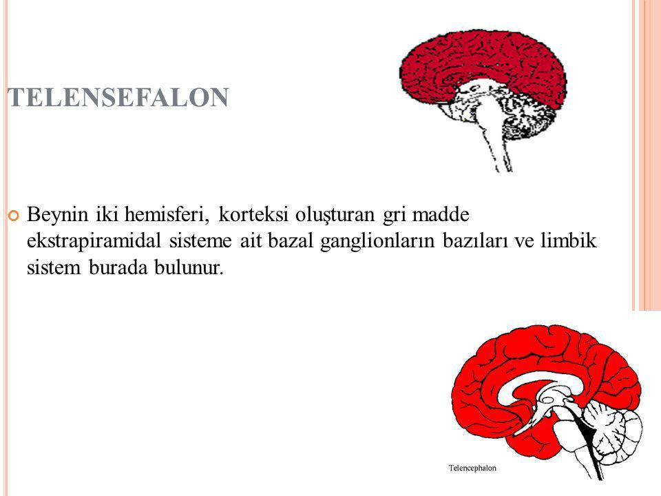 TELENSEFALON Beynin iki hemisferi, korteksi oluşturan gri madde ekstrapiramidal sisteme ait bazal ganglionların bazıları ve limbik sistem burada bulunur.