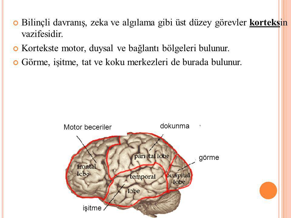 Bilinçli davranış, zeka ve algılama gibi üst düzey görevler korteksin vazifesidir.