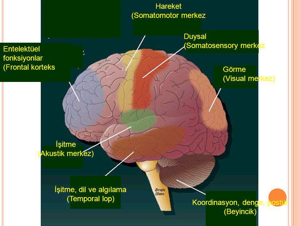 Entelektüel fonksiyonlar (Frontal korteks Hareket (Somatomotor merkez Duysal (Somatosensory merkez Görme (Visual merkez) İşitme (Akustik merkez) İşitme, dil ve algılama (Temporal lop) Koordinasyon, denge, postür (Beyincik)