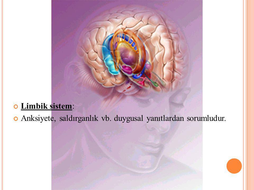 Limbik sistem: Anksiyete, saldırganlık vb. duygusal yanıtlardan sorumludur.