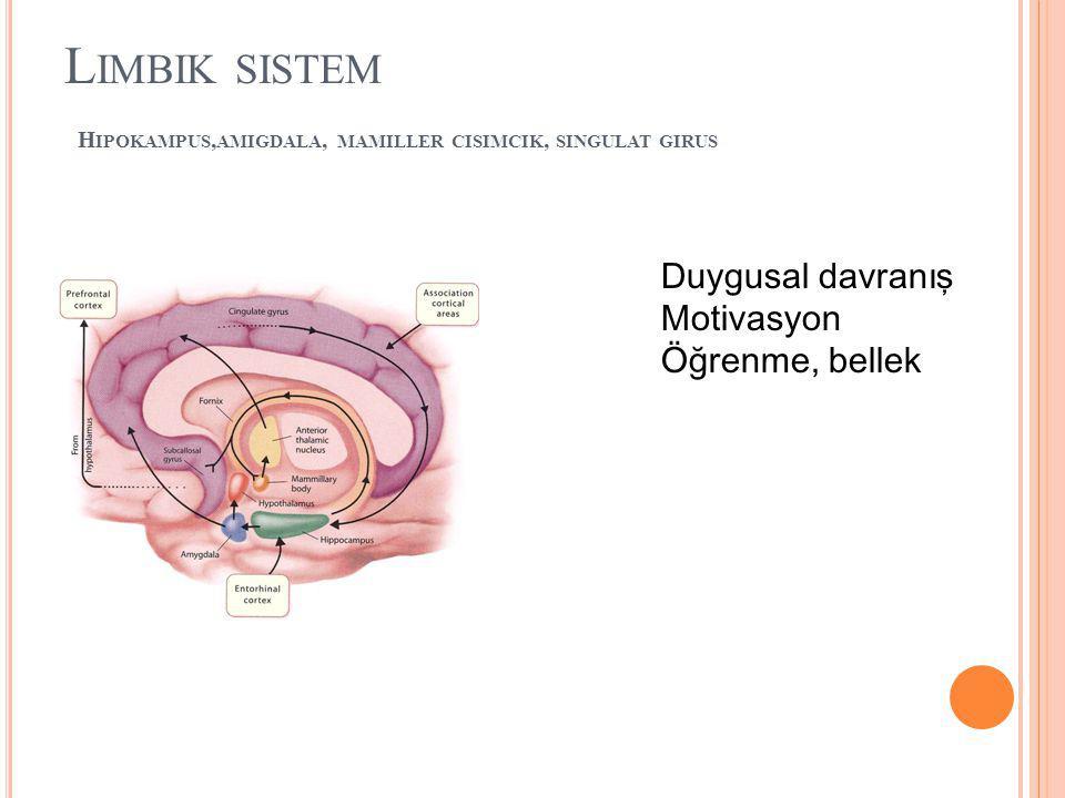 L IMBIK SISTEM H IPOKAMPUS, AMIGDALA, MAMILLER CISIMCIK, SINGULAT GIRUS Duygusal davranış Motivasyon Öğrenme, bellek