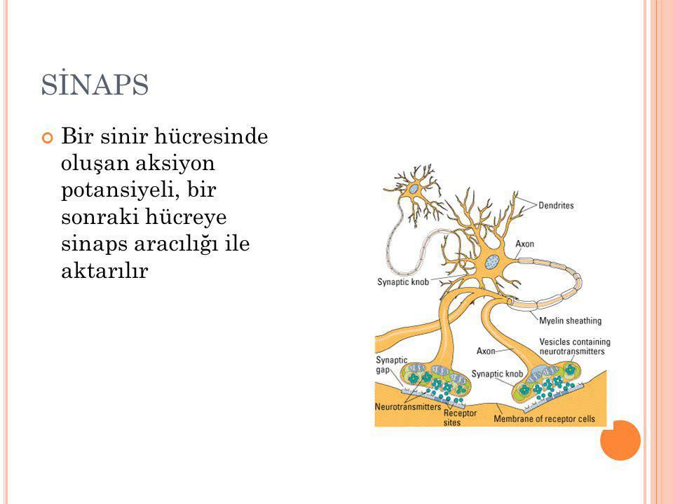 SİNAPS Bir sinir hücresinde oluşan aksiyon potansiyeli, bir sonraki hücreye sinaps aracılığı ile aktarılır