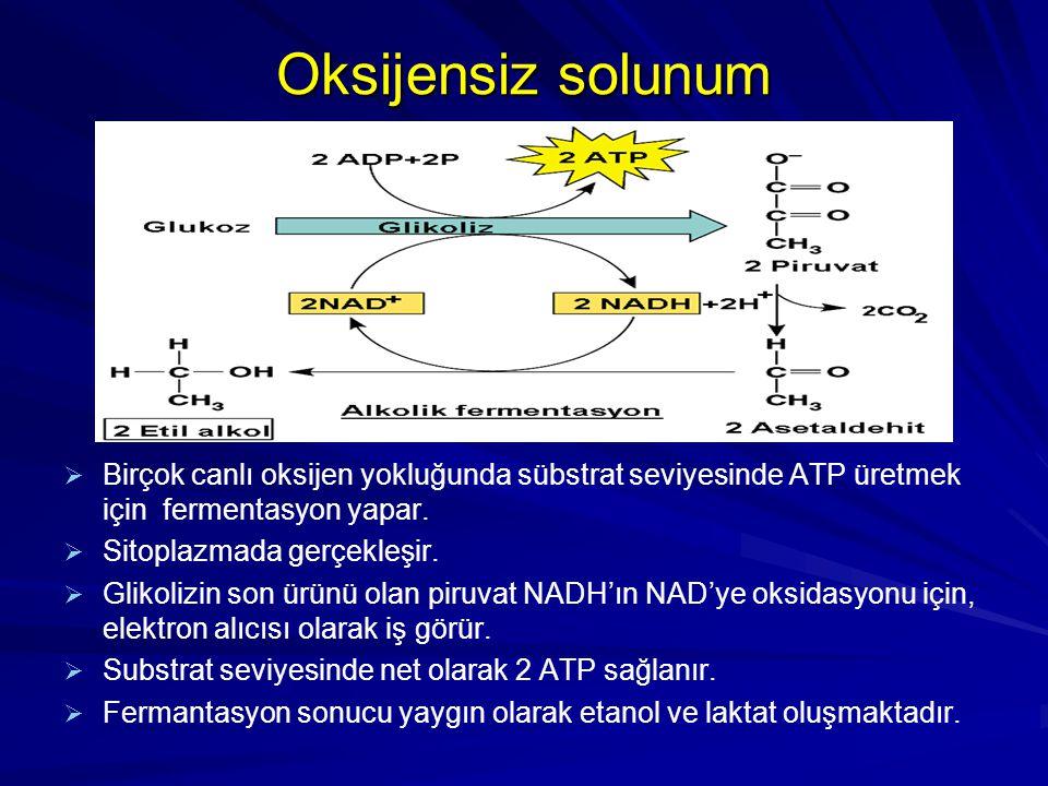 Oksijensiz solunum   Birçok canlı oksijen yokluğunda sübstrat seviyesinde ATP üretmek için fermentasyon yapar.   Sitoplazmada gerçekleşir.   Gli