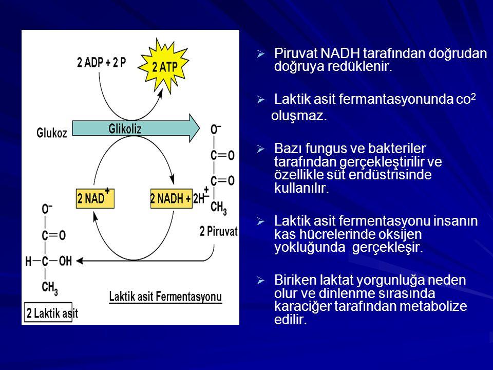   Piruvat NADH tarafından doğrudan doğruya redüklenir.   Laktik asit fermantasyonunda co 2 oluşmaz.   Bazı fungus ve bakteriler tarafından gerçe