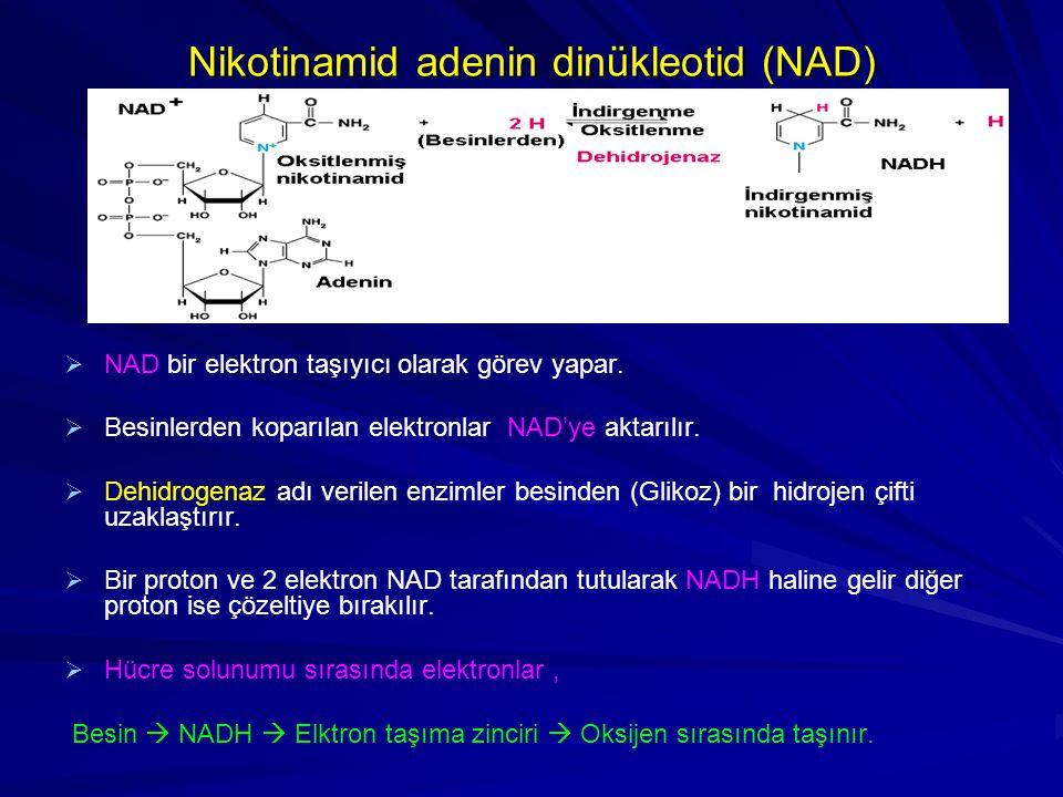   NAD bir elektron taşıyıcı olarak görev yapar.   Besinlerden koparılan elektronlar NAD'ye aktarılır.   Dehidrogenaz adı verilen enzimler besind