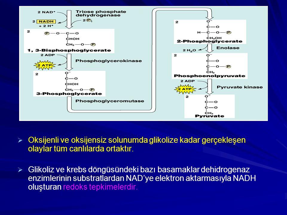   Oksijenli ve oksijensiz solunumda glikolize kadar gerçekleşen olaylar tüm canlılarda ortaktır.   Glikoliz ve krebs döngüsündeki bazı basamaklar