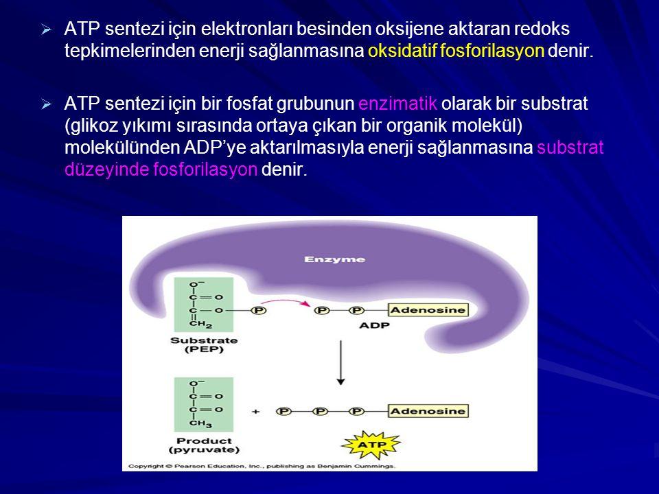   ATP sentezi için elektronları besinden oksijene aktaran redoks tepkimelerinden enerji sağlanmasına oksidatif fosforilasyon denir.   ATP sentezi