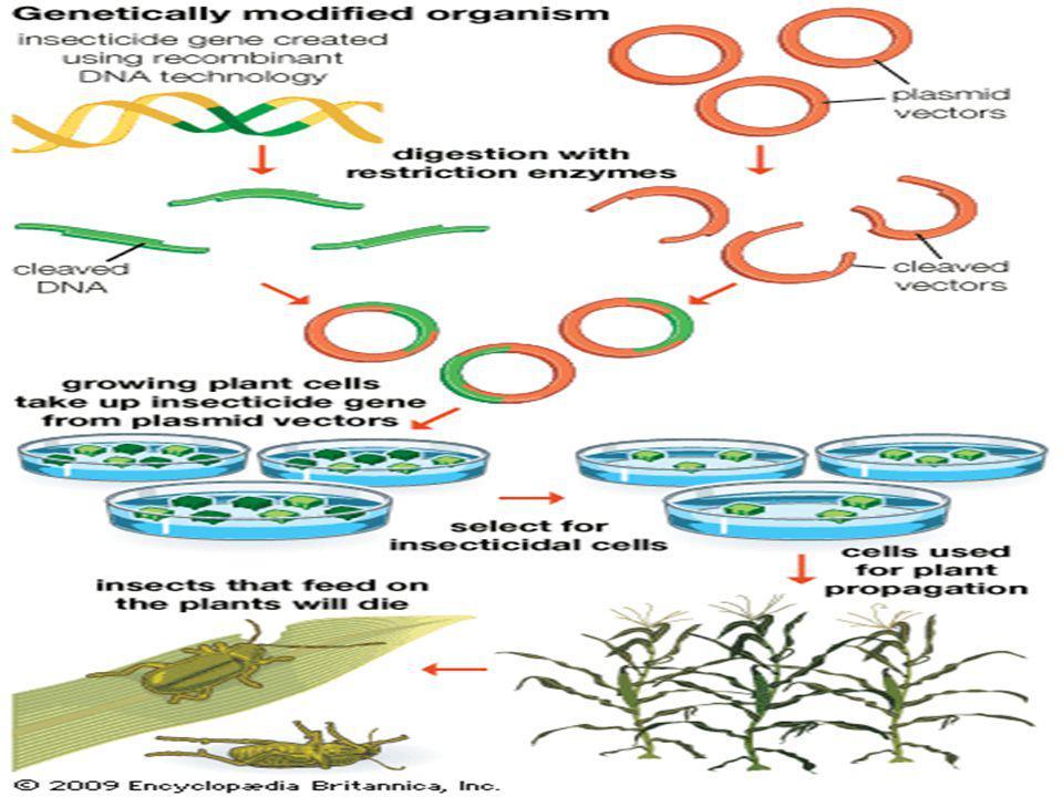 Zararlı bitkilerle savaşmada kullanılan ilaçlara karşı dayanıklı hale getirilmiş soya fasulyesi, kolza, kanola, mısır ve pamuk bitkileri de var.