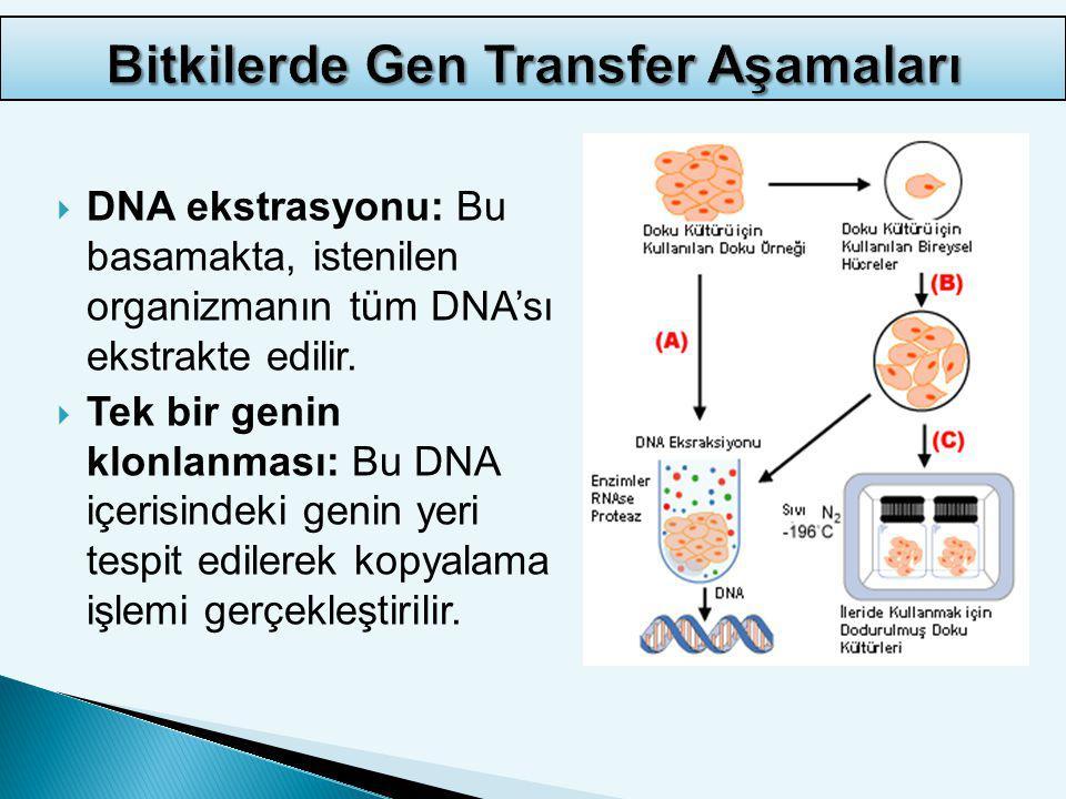  Genin dizayn edilmesi: İlgili gen kopyalandıktan sonra bitki içerisinde eksprese olabilmesi için modifiye edilir.