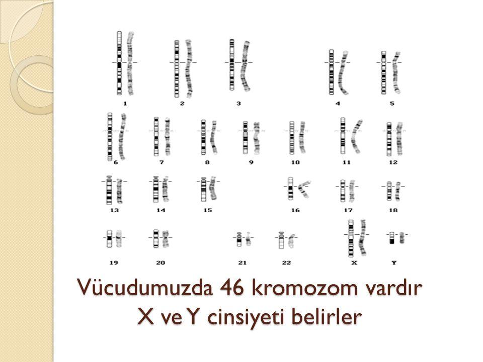 Vücudumuzda 46 kromozom vardır X ve Y cinsiyeti belirler