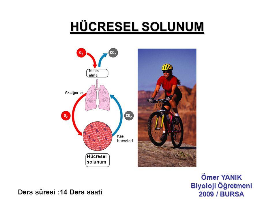 HÜCRESEL SOLUNUM Ömer YANIK Biyoloji Öğretmeni 2009 / BURSA Nefes alma Hücresel solunum Kas hücreleri Akciğerler Ders süresi :14 Ders saati