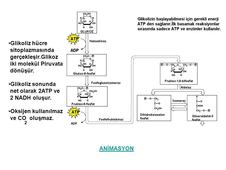 Glikoliz hücre sitoplazmasında gerçekleşir.Glikoz iki molekül Piruvata dönüşür. Glikoliz sonunda net olarak 2ATP ve 2 NADH oluşur. Oksijen kullanılmaz