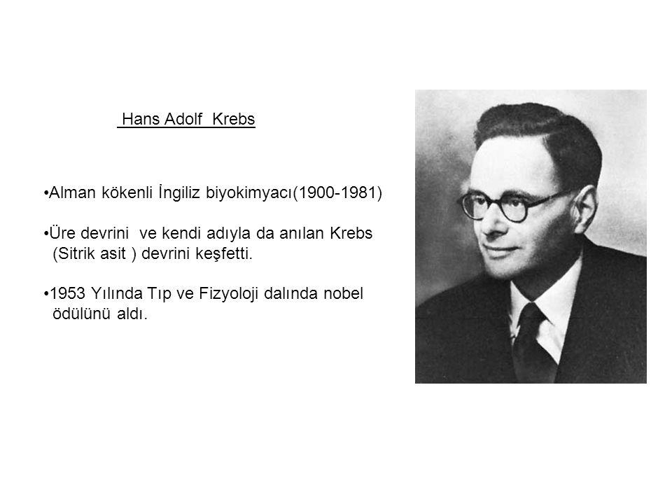 Hans Adolf Krebs Alman kökenli İngiliz biyokimyacı(1900-1981) Üre devrini ve kendi adıyla da anılan Krebs (Sitrik asit ) devrini keşfetti. 1953 Yılınd