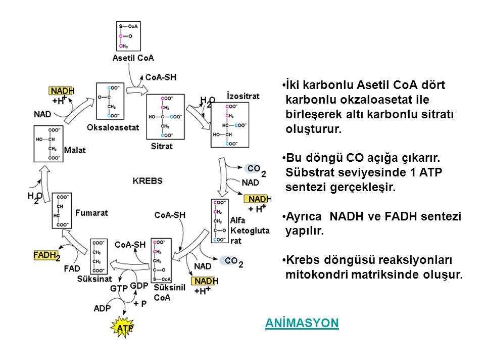 İki karbonlu Asetil CoA dört karbonlu okzaloasetat ile birleşerek altı karbonlu sitratı oluşturur. Bu döngü CO açığa çıkarır. Sübstrat seviyesinde 1 A