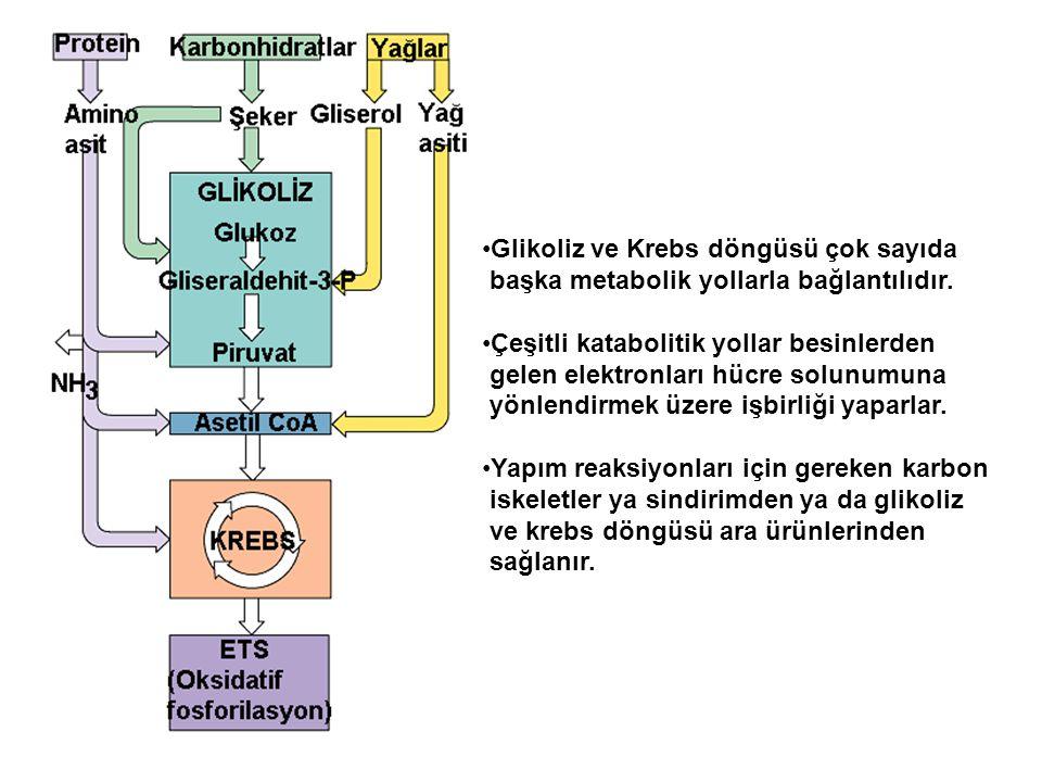 Glikoliz ve Krebs döngüsü çok sayıda başka metabolik yollarla bağlantılıdır. Çeşitli katabolitik yollar besinlerden gelen elektronları hücre solunumun