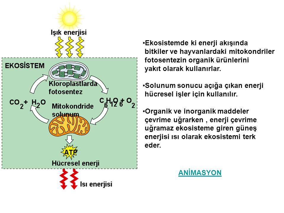 Ekosistemde ki enerji akışında bitkiler ve hayvanlardaki mitokondriler fotosentezin organik ürünlerini yakıt olarak kullanırlar. Solunum sonucu açığa