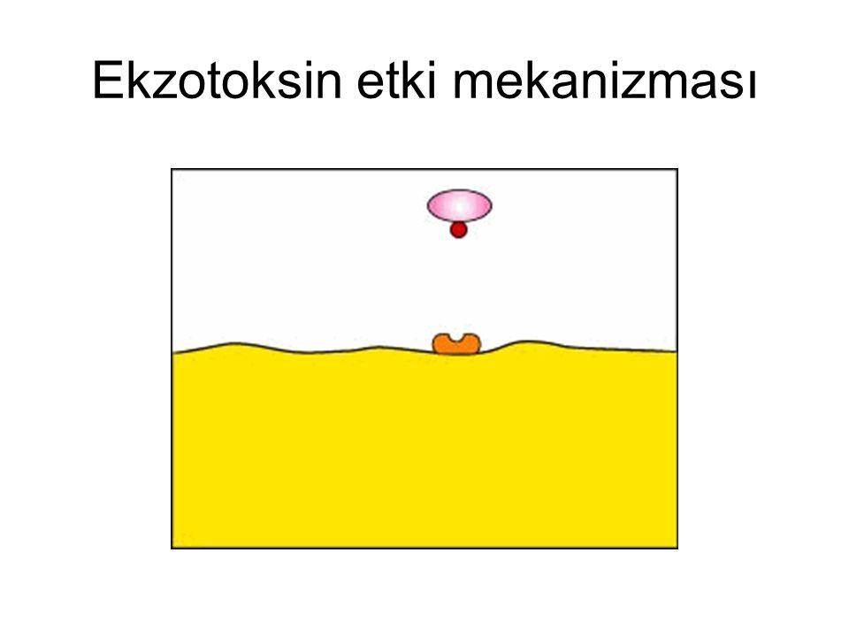 Ekzotoksin etki mekanizması