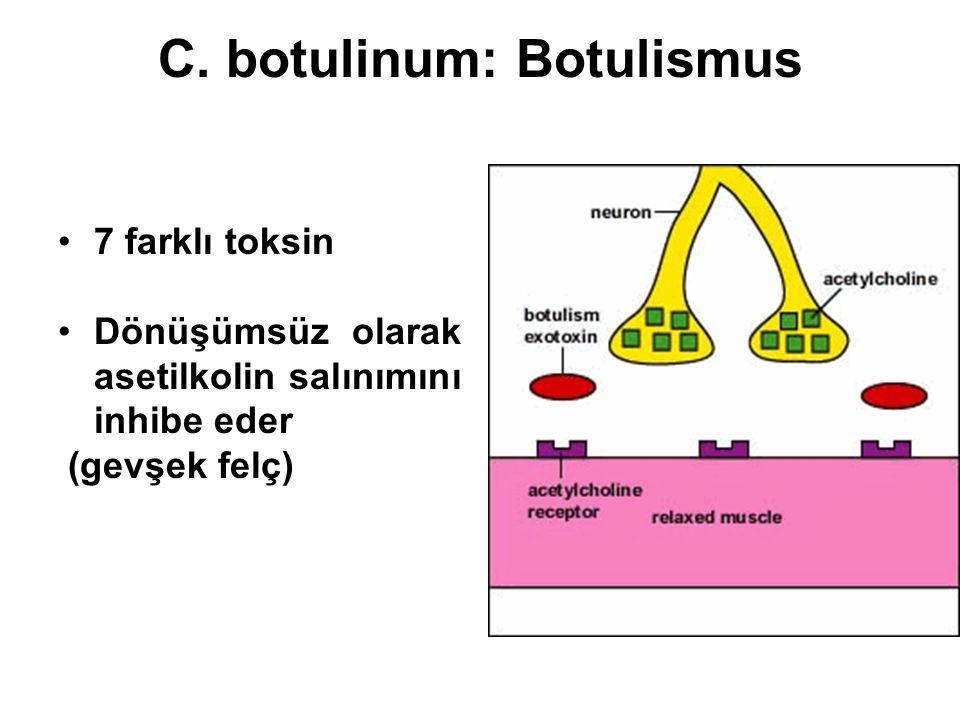 C. botulinum: Botulismus 7 farklı toksin Dönüşümsüz olarak asetilkolin salınımını inhibe eder (gevşek felç)