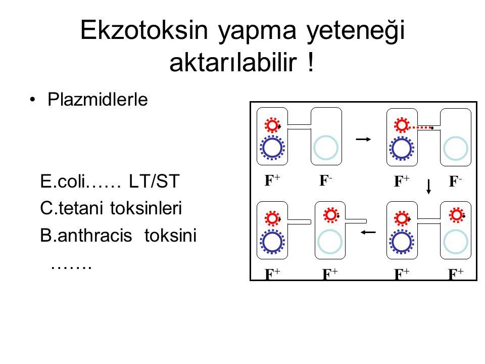 Ekzotoksin yapma yeteneği aktarılabilir ! Plazmidlerle E.coli…… LT/ST C.tetani toksinleri B.anthracis toksini ……. F+F+ F-F- F+F+ F-F- F+F+ F+F+ F+F+ F