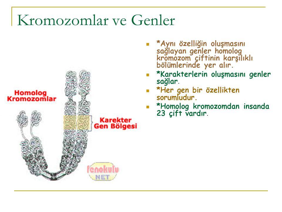 Kromozomlar ve Genler *Aynı özelliğin oluşmasını sağlayan genler homolog kromozom çiftinin karşılıklı bölümlerinde yer alır.