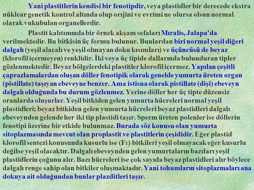 Yani plastitlerin kendisi bir fenotipdir, veya plastidler bir derecede ekstra nüklear genetik kontrol altında olup orıjini ve evrimi ne olursa olsun normal olarak vukubulan organellerdir.
