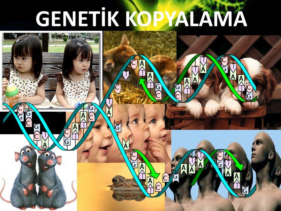 GENETİK KOPYALAMA