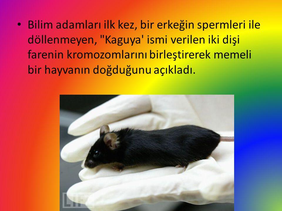 Bilim adamları ilk kez, bir erkeğin spermleri ile döllenmeyen, Kaguya ismi verilen iki dişi farenin kromozomlarını birleştirerek memeli bir hayvanın doğduğunu açıkladı.