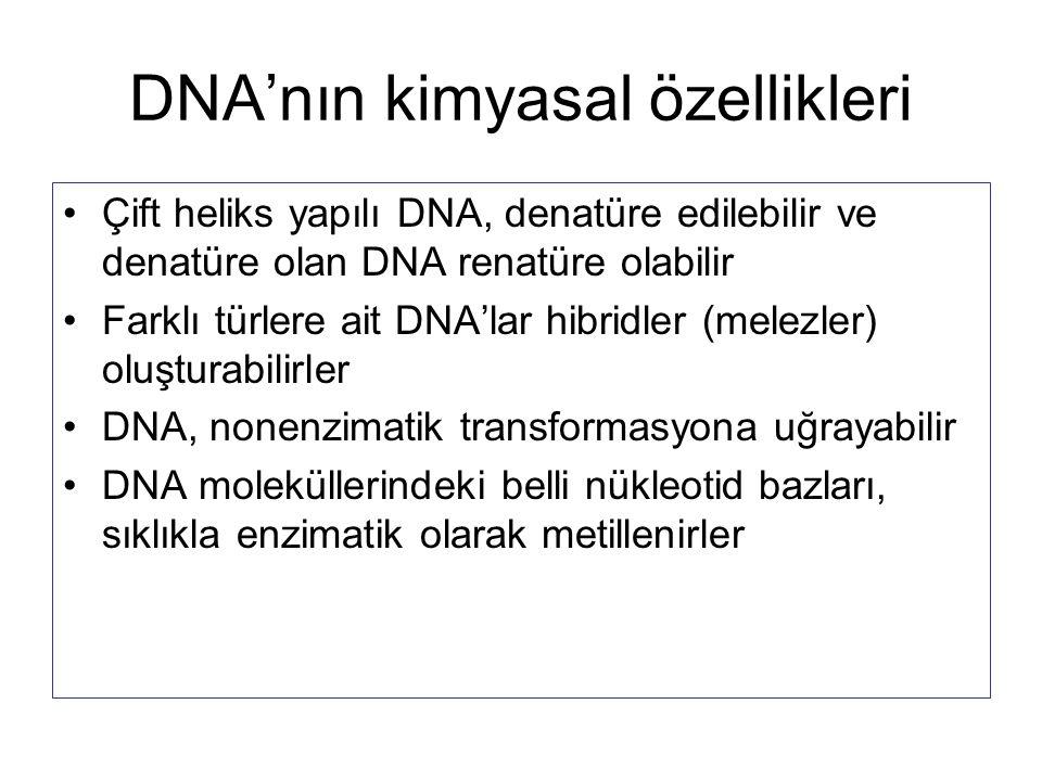 DNA'nın kimyasal özellikleri Çift heliks yapılı DNA, denatüre edilebilir ve denatüre olan DNA renatüre olabilir Farklı türlere ait DNA'lar hibridler (