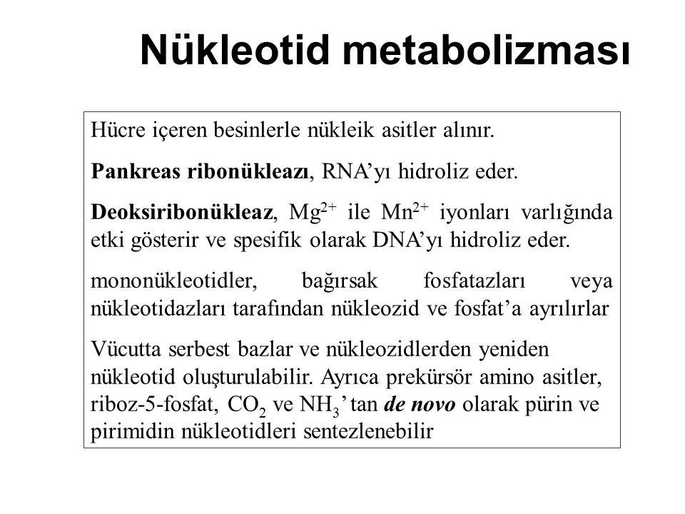 Nükleotid metabolizması Hücre içeren besinlerle nükleik asitler alınır. Pankreas ribonükleazı, RNA'yı hidroliz eder. Deoksiribonükleaz, Mg 2+ ile Mn 2