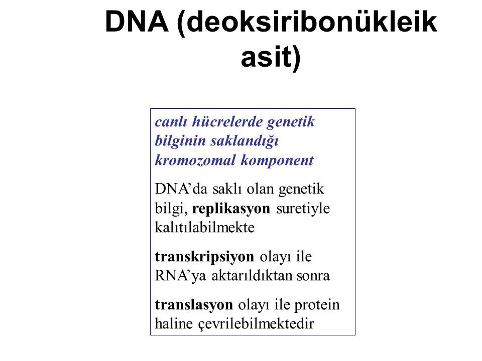 DNA (deoksiribonükleik asit) canlı hücrelerde genetik bilginin saklandığı kromozomal komponent DNA'da saklı olan genetik bilgi, replikasyon suretiyle