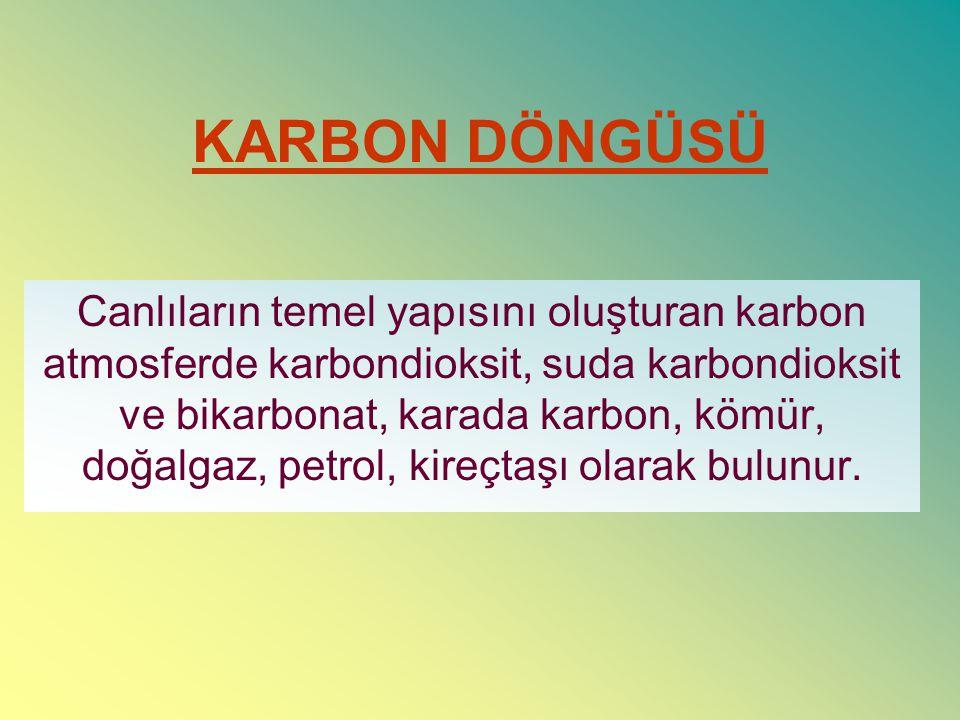 KARBON DÖNGÜSÜ Canlıların temel yapısını oluşturan karbon atmosferde karbondioksit, suda karbondioksit ve bikarbonat, karada karbon, kömür, doğalgaz,