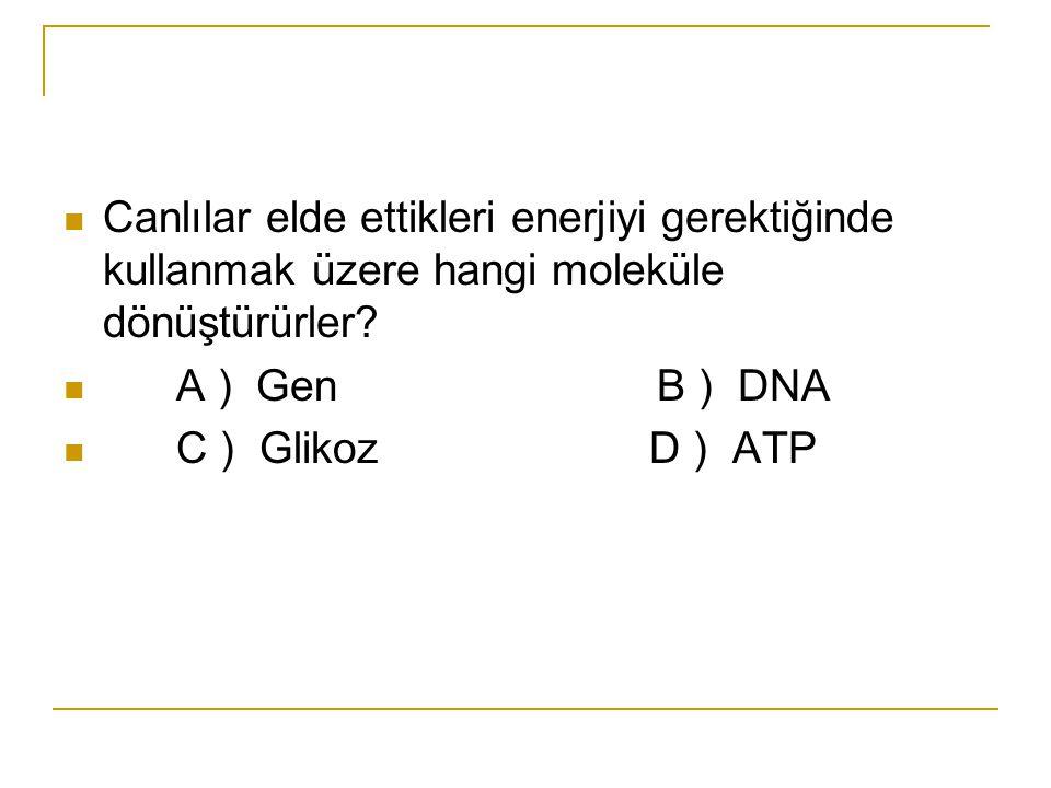 Canlılar elde ettikleri enerjiyi gerektiğinde kullanmak üzere hangi moleküle dönüştürürler? A ) Gen B ) DNA C ) Glikoz D ) ATP