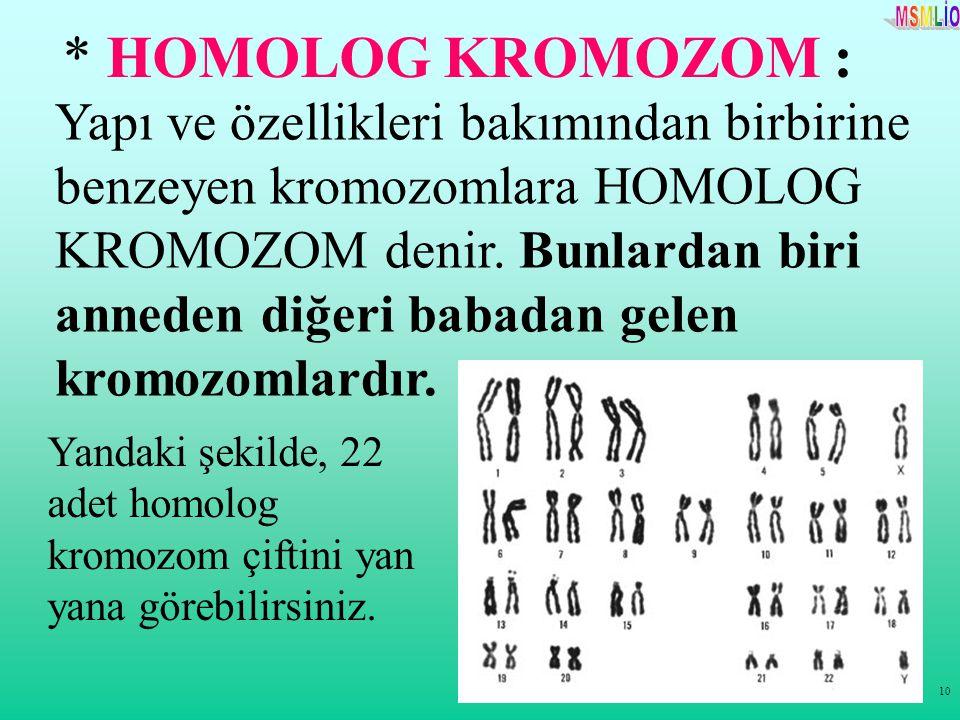 10 Yapı ve özellikleri bakımından birbirine benzeyen kromozomlara HOMOLOG KROMOZOM denir. Bunlardan biri anneden diğeri babadan gelen kromozomlardır.