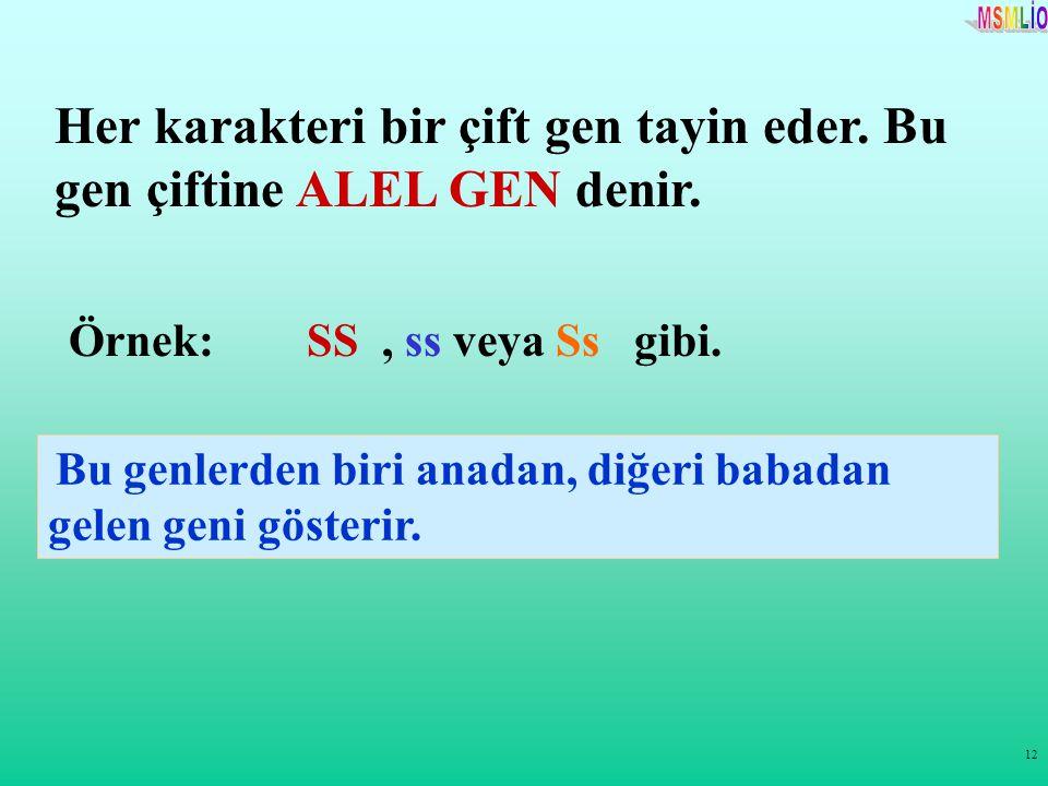 12 Her karakteri bir çift gen tayin eder. Bu gen çiftine ALEL GEN denir. Örnek: SS, ss veya Ss gibi. Bu genlerden biri anadan, diğeri babadan gelen ge