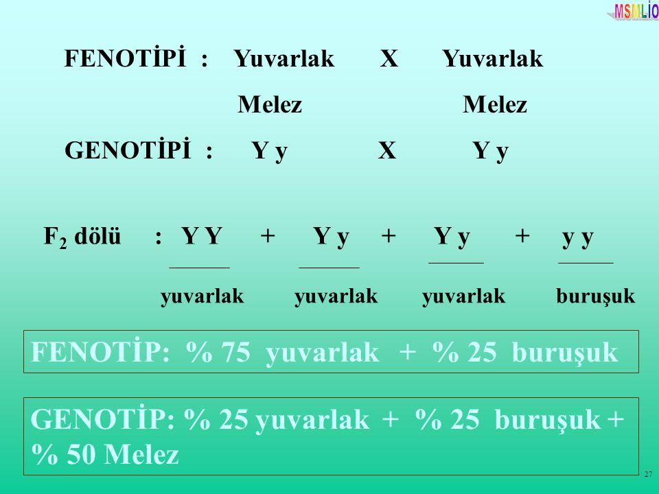 27 FENOTİPİ : Yuvarlak X Yuvarlak Melez Melez GENOTİPİ : Y y X Y y F 2 dölü : Y Y + Y y + Y y + y y FENOTİP: % 75 yuvarlak + % 25 buruşuk yuvarlak yuv