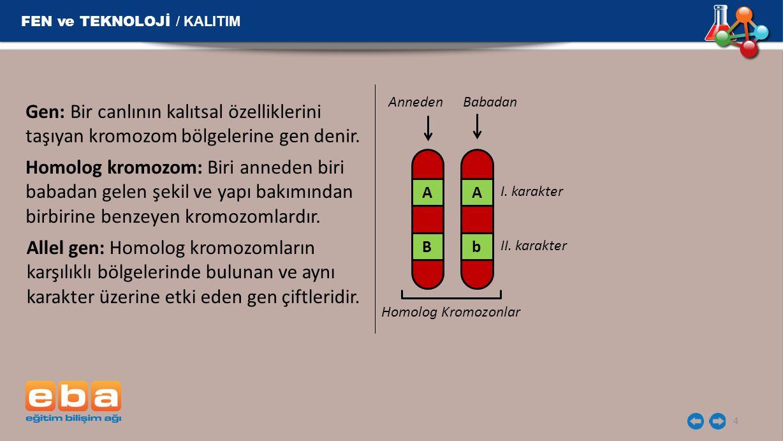 Gen: Bir canlının kalıtsal özelliklerini taşıyan kromozom bölgelerine gen denir. 4 FEN ve TEKNOLOJİ / KALITIM Homolog kromozom: Biri anneden biri baba