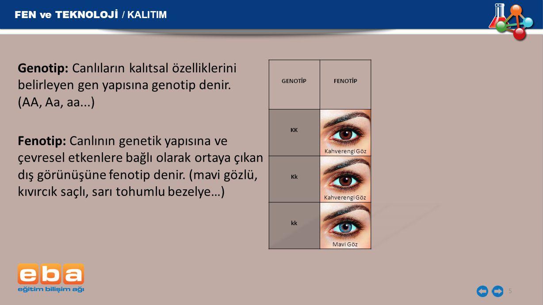 Genotip: Canlıların kalıtsal özelliklerini belirleyen gen yapısına genotip denir. (AA, Aa, aa...) 5 FEN ve TEKNOLOJİ / KALITIM Fenotip: Canlının genet