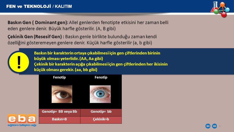 Fenotip Genotip= BB veya BbGenotip= bb Baskın=BÇekinik=b Baskın Gen ( Dominant gen): Allel genlerden fenotipte etkisini her zaman belli eden genlere d